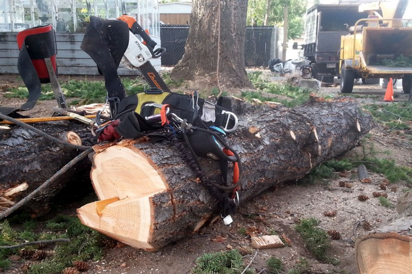 Tree Removal Penticton